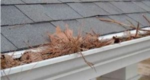 Gutter Guard located in Adelaide