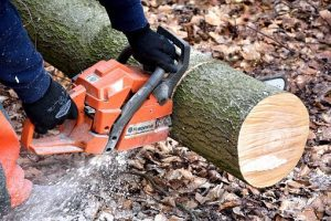 stump-removal-adelaide